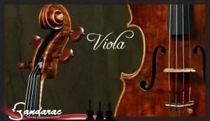 30 - viola