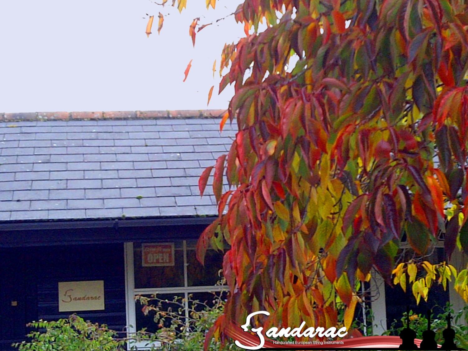 15 - autumn leaves
